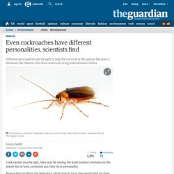Even cockroaches have different personalities, scientists find