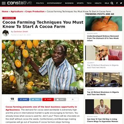 Cocoa Farming Technique, How To Start A Cocoa Farm