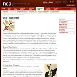 What Is Coffee? - National Coffee Association