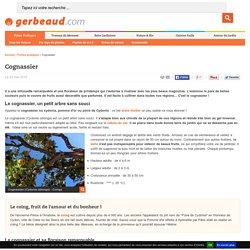 Cognassier : un arbre oublié pour le jardin