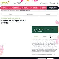 Cognassier du Japon MANGO STORM®