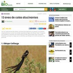 13 aves de colas alucinantes - Notas - La Bioguía