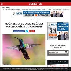 Vidéo : le vol du colibri dévoilé par les caméras ultrarapides