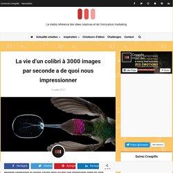 La vie d'un colibri à 3000 images par seconde a de quoi nous impressionner