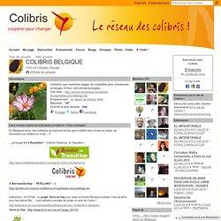 COLIBRIS BELGIQUE
