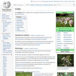 Colitx