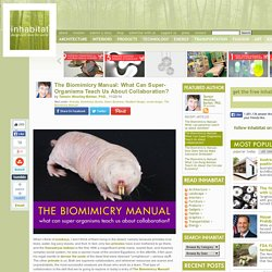 The Biomimicry Manual: What Can Super-Organisms Teach Us About Collaboration?