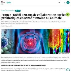 INRAE 21/01/21 France-Brésil : 20 ans de collaboration sur les probiotiques en santé humaine ou animale