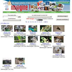Im@gine! : banque d'images libres de droits et gratuites pour l'éducation, collaborative de l'Académie de Montpellier
