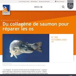 Du collagène de saumon pour réparer les os