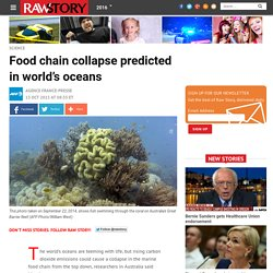 Food chain collapse predicted in world's oceans