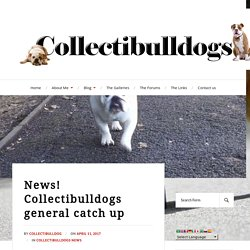 News! Collectibulldogs general catch up