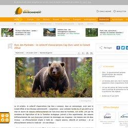 Ours des Pyrénées: le collectif d'associations Cap Ours saisit le Conseil d'État