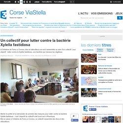 FRANCE 3 CORSE 20/08/14 Un collectif pour lutter contre la bactérie Xylella fastidiosa.