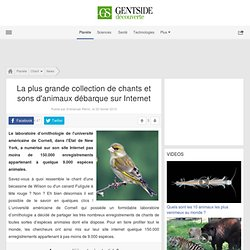La plus grande collection de chants et sons d'animaux débarque sur Internet
