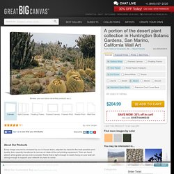 A portion of the desert plant collection in Huntington Botanic Gardens, San Marino, California Photo Canvas Print