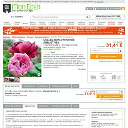 Collection 2 Pivoines arbustives, Paeonia suffruticosa - MonEden
