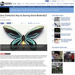Are Collectors Key to Saving Giant Butterfly?