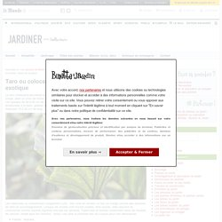 Taro ou colocase (Colocasia esculenta) : légume, plantation, culture