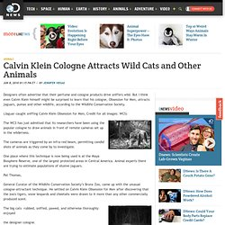 Calvin Klein Cologne Attracts Wild Cats