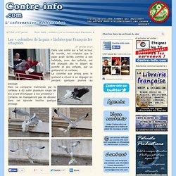 Les « colombes de la paix » lâchées par François Ier attaquées