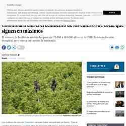 Colombia frena el crecimiento de los cultivos de coca, que siguen en máximos