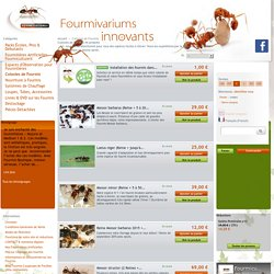 Colonies de fourmis