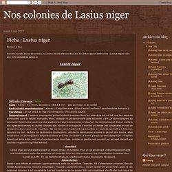 Nos colonies de Lasius niger: Fiche : Lasius niger