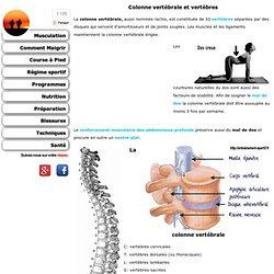Colonne vertébrale et vertèbres