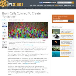 Brain Cells Colored To Create 'Brainbow'