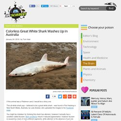 Colorless Great White Shark Washes Up In Australia