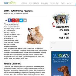 Dogs Naturally Magazine » COLOSTRUM FOR DOG ALLERGIES