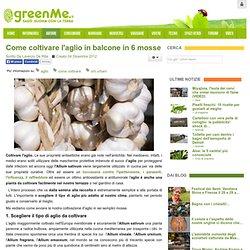Come coltivare l'aglio in balcone in 6 mosse