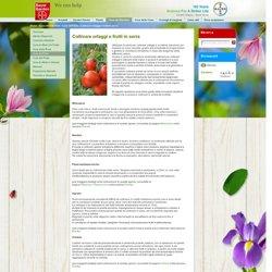 Coltivare ortaggi e frutti in serra - Bayer Garden