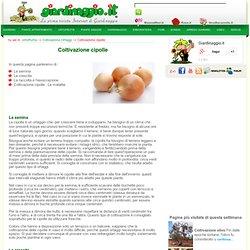 Coltivazione cipolle - ortofrutta - Coltivazione Ortaggi