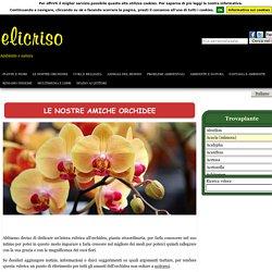 Orchidee, Tecniche di coltivazione e principali specie di Orchidea
