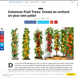 Columnar Fruit Trees: Create an orchard on your own patio! - Crafts Archives