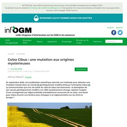 INFOGM 29/09/20 Colza Cibus : une mutation aux origines mystérieuses