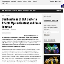 Combinations of Gut Bacteria Affects Myelin Content and Brain Function – Neuroscience News