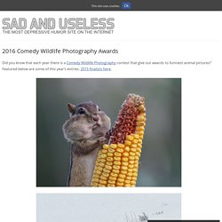 2016 Comedy Wildlife Photography Awards