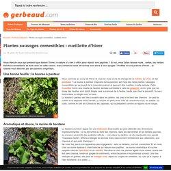 Plantes Sauvages Comestibles : Cueillette d'Hiver