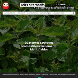 20 plantes sauvages comestibles facilement identifiables