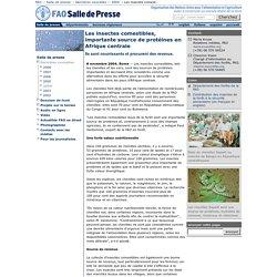 Les insectes comestibles, importante source de protéines en Afrique centrale