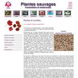 La mongette - Vigna unguiculata- haricot sauvage