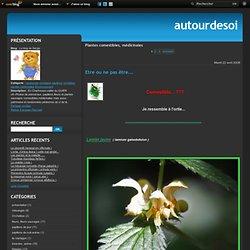 Plantes comestibles, médicinales - Etre ou ne pas… - Lamier pourpre - Alchemille - l'Oseille - Plantain lancéolé - Le sureau noir… - la Sauge ( salvia… - un parasite... - Raiponce ...à la… - Pimprenelle et ..... - Le blog de Sergio