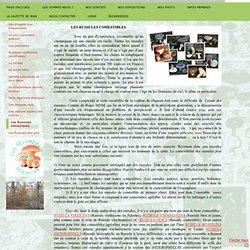 Les Russules comestibles - mycophiles-des-mauvess jimdo page!