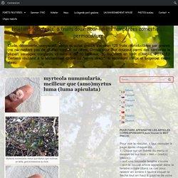 """myrteola nummularia, meilleur que (amo)myrtus luma (luma apiculata) - Fruitiers """"originels"""" à fruits doux: pour forêts tempérées comestibles, permaculture."""