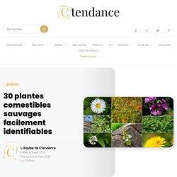 30 plantes comestibles sauvages : la liste complète !