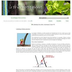 Comment abattre un arbre ? : abattage d'un arbre penché et dangereux