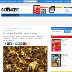 Comment l'abeille devient reine - Pour la Science 8/11/2010
